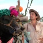 charette boeuf - fête du pongol - Saint-Louis - La Réunion